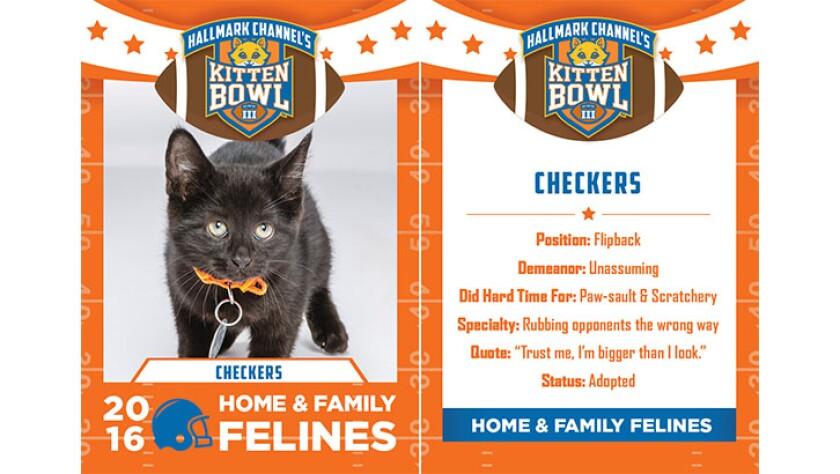 Checkers-felines-KBIII.jpg