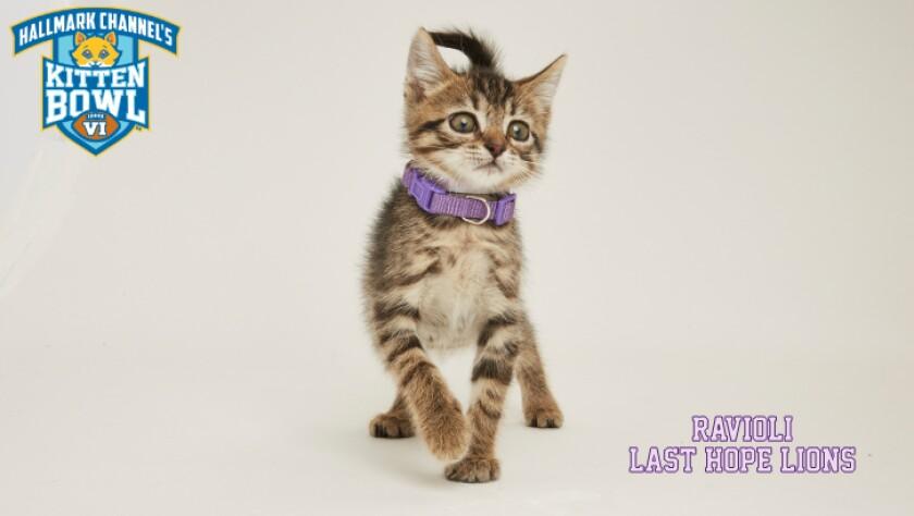 PP-Ravioli-meet-the-kittens-KBVI.jpg