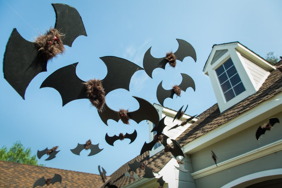 hf6030-product-bats.jpg