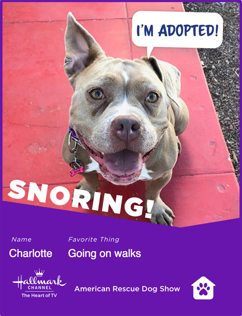 Charlotte-snoring.png