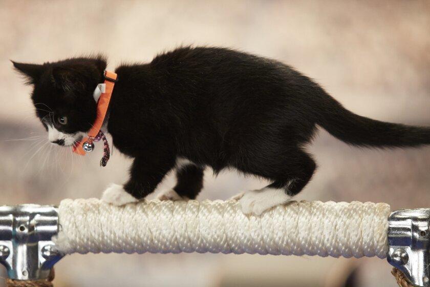 KittenSummerGames_0076.jpg
