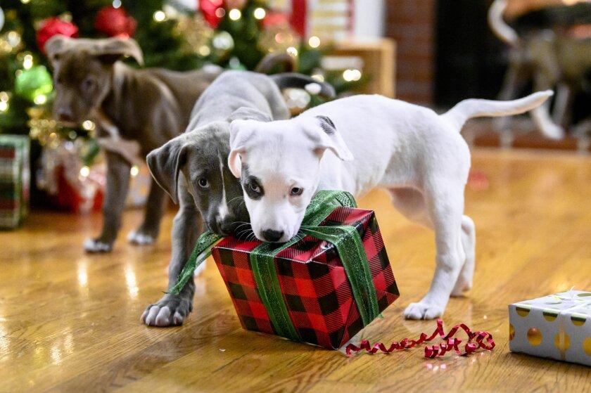 10 Ways to Celebrate Christmas - 11