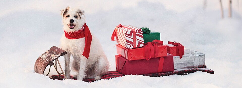 Countdown to Christmas News