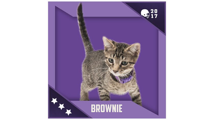 Kitten Bowl IV Emojis - North Shore Bengals - Brownie