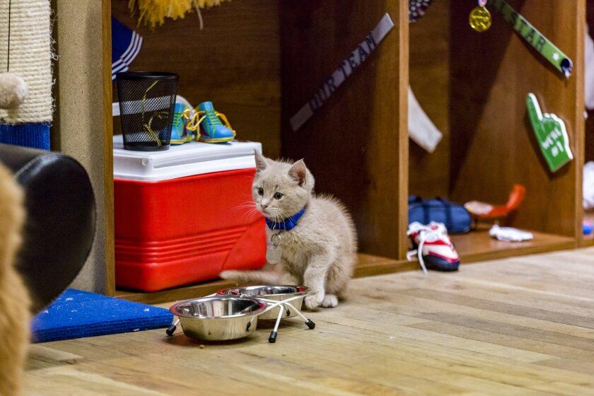 KittenBowl3_0795.jpg