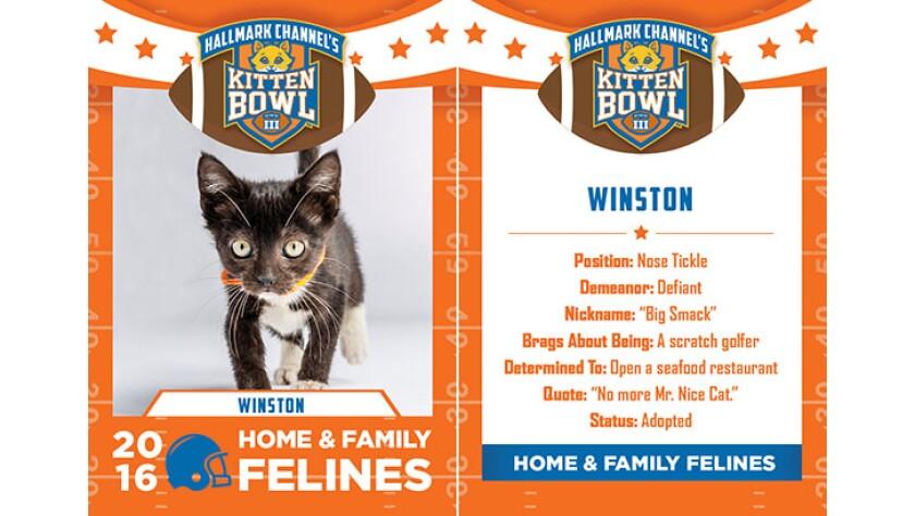 Winston-felines-KBIII.jpg