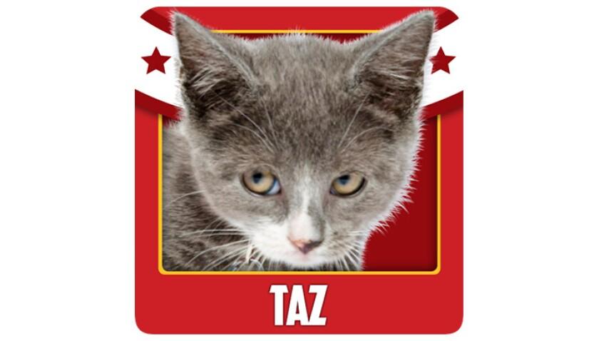 Emojis-KBIII-Lions-Taz.jpg