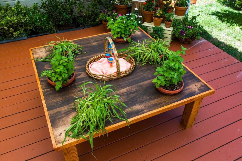 DIY Tabletop Cat Garden