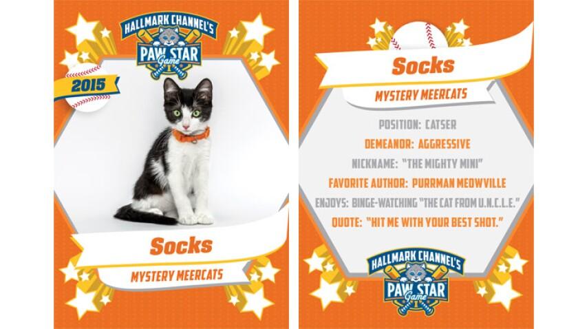 paw-star-socks-2015
