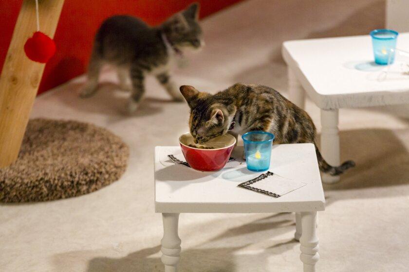 KittenBowl3_2083.jpg