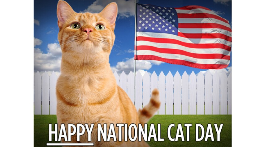 happy-national-cat-day-102915