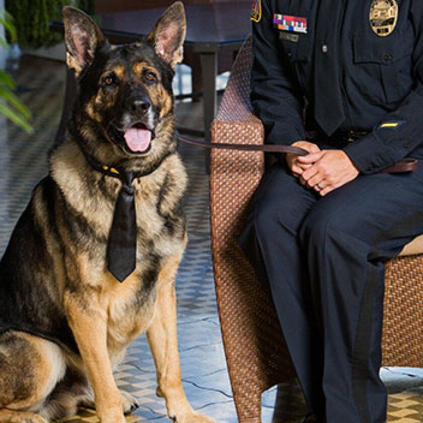 Law Enforcement Dogs Category - Kota