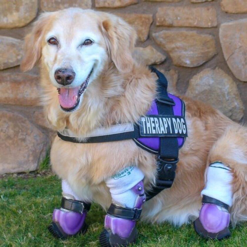 American Humane Hero Dog Awards 2018 Finalist - Chi Chi - Therapy