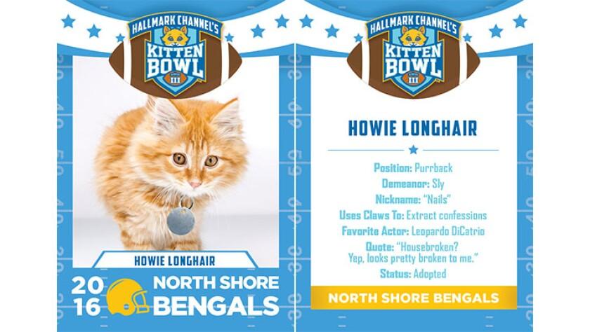 HowieLonghair-bengals-KBIII.jpg