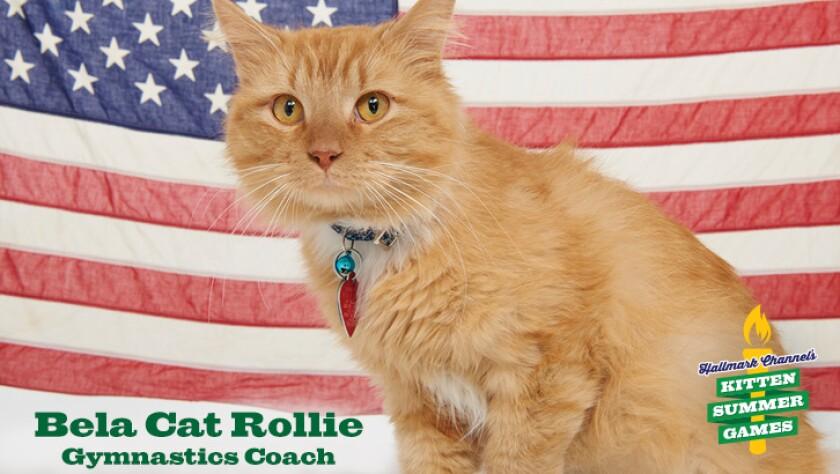 KittenSummerGames_726x410_BelaCatRollie.jpg