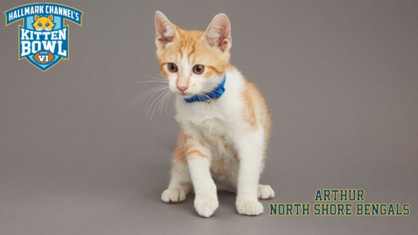 NB-Arthur-meet-the-kittens-KBV.jpg