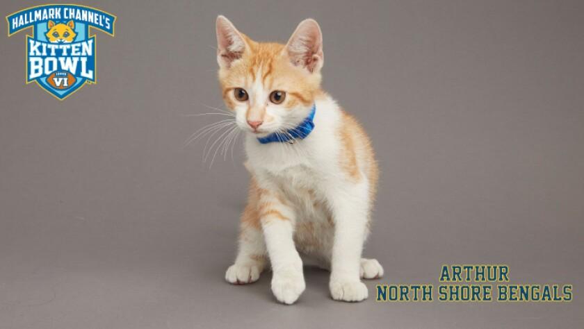 NB-Arthur-meet-the-kittens-KBV.jpg