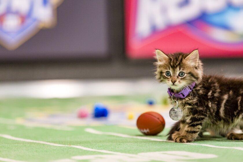 Kitten Bowl III Photo Gallery 14
