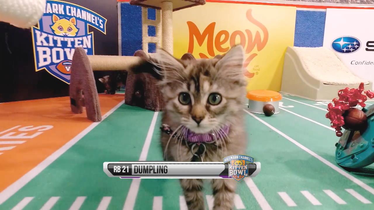 Cat Lete Of The Week Dumpling Kitten Bowl V